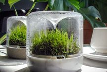 Mossariums and Indoor Plant Vessels / Bring the outside inside with Botanica Boutique mossariums, planate petites  and indoor plant vessels. International shipping.