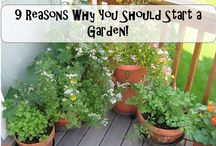 Urbanmali videos / Must watch videos on everything you would want to know about Gardening.