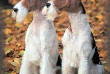 Foxterriers
