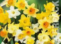 Spring Bulbs & Seeds / Discount Spring Bulbs,Discount Tulips, Discount Shake n Rake Seed Shaker