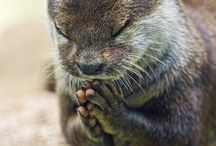 祈り 眠り