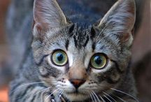 The Beauty of Cats / Photographs capturing the beauty of our feline companions.