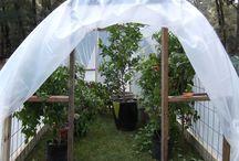 Greenhouse Ideas