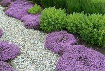 Flores cubre suelos