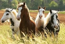 Brumby Beauty / Living wild and free