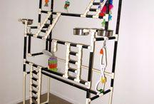 Parrot's toys