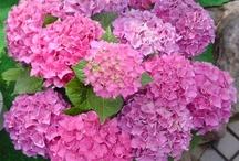 ¡¡ Flores, Jardines, Maravillosa Naturaleza !!