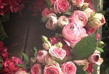 flowers-pansies