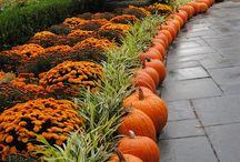 It's That Time of Year / Pins to reflect and celebrate the changing seasons, holidays and special events.