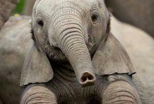 Animales q te hacen morir de amor!!❤️❤️❤️