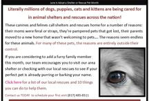 Animal Rescue / Learn more about animal rescue organizations in our area