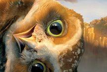 Ⓟe♈ Animatopia Sky ☁☀ / Aves e pássaros de todo o mundo (fotos, photos, ilustrações, desenhos e mais).