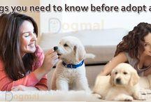 DOG ADOPTION / Find best tips for dog adoption.