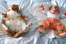 Kedi ile bebek
