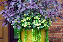 Hage / Hage Potter planter