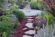 Bodendecker / Wo Bodendecker sind, findet man fließende Blütenteppiche, bunte Lückenfüller im Steingarten und dicht bewachsene Vorgärten. Ihr Zierwert begeistert die Betrachter mit bunten Blüten oder Blattschmuck. In dieser Pinnwand finden Sie eine Sammlung von allem was uns gefällt.