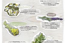 Garten & Kräuter / Diese Kräuter sind nicht nur schön anzusehen, sondern haben auch noch Wirkung!