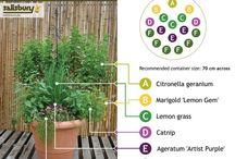Home: Garden Pest Control