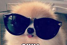 GIMME A POM / I want a Pomeranian so badly! / by Jensen Bosarge