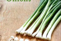 endless supply of spring onions
