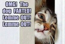 Cats are hilarious