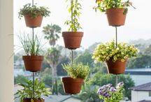 Városi kertészet