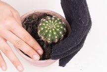 почва для кактусов и удобрения
