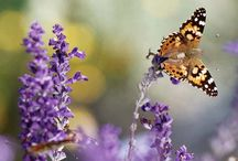 Butterflies and Dragonflies / by Risa Westhoff