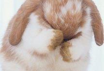 lapin  / Ses juste des lapin trop cute