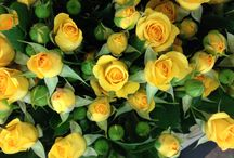 Flower Varieties {Yellow flowers} / Looking to buy yellow flowers?