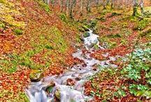 Selva de Irati / En otoño a la selva de Irati http://www.viajealpirineo.com/otono-selva-irati/