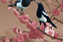 the little corvids / raven's little cousins: magpie, stellar jay, and crow