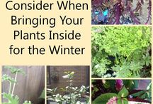 fall/winter gardening