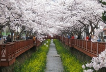 Scenery, South Korea