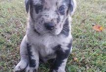 My big boy Bleu