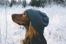 моя собачья любовь