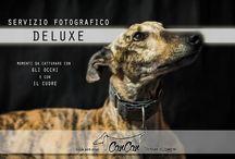 Servizi da cani by Regalidacani / Servizi disponibili per il benessere e il tempo libero dei 4 zampe e dei loro padroni