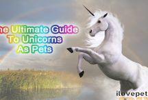 Unicorns As Pets