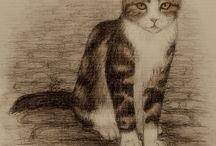 Cats / koty