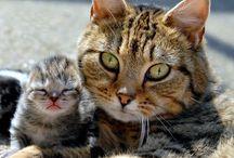 Amore di gatta