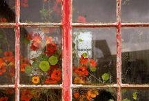 Windows / by CM Reith