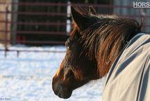 Horse exercises