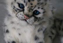 Μωρά ζώα