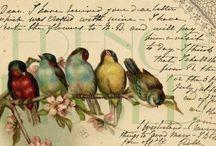 Uccelli Vintage