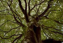 Trees ✩