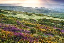 Dartmoor Landscapes