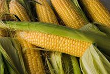 GMO Corn Lawsuits