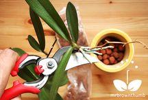 pokojové kytky -orchideje