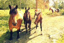 The Horses of my life