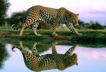 Wild animals wallpapers and information